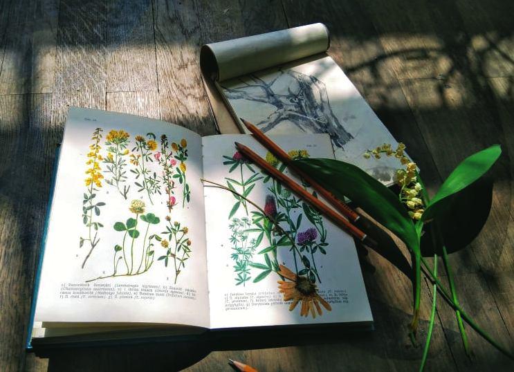 Workshop: Kresba jarní vegetace